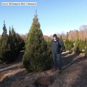 Juniperus Hetzi Columnaris